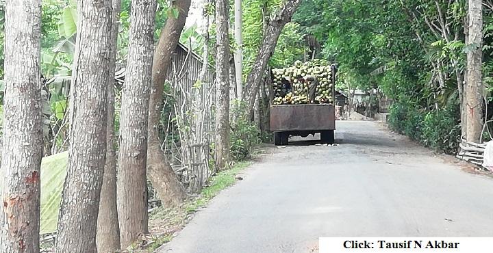 ইন্দুরকানীর ডাব যাচ্ছে রাজধানীসহ সারাদেশে